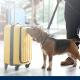 Diensthund eines Diensthundeführers im Sicherheitsdienst am Flughafen bei der Gepäckkontrolle