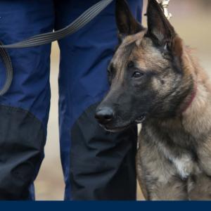 Diensthundeführer mit Hund beim Objektschutz